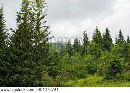 Summer Day In The Mountains. Beautiful Mountain Landscape. Ukrainian Carpathians, Climbing Mount Hov