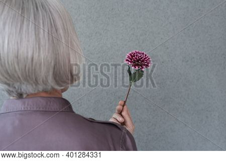 Close-up Of A Gray-haired Woman With Red Dahlia Flower, On Gray Background.