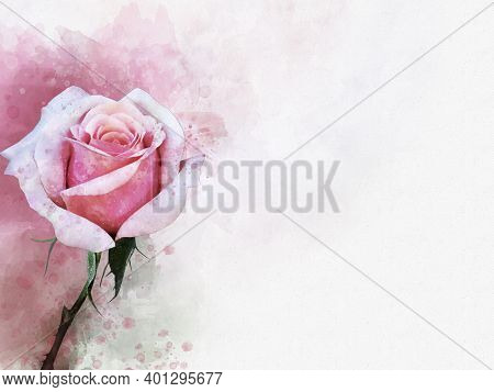 A Watercolor Drawing Of A Vibrant Pink Rose Flower. Botanical Art. Decorative Element For A Greeting