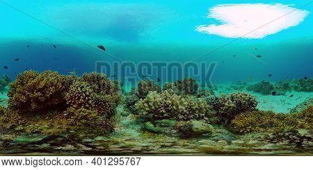 Underwater Scene Coral Reef. Underwater Sea Fish. Tropical Reef Marine. Colourful Underwater Seascap