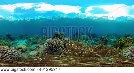 Coral Reef Fish Scene. Tropical Underwater Sea Fish. Colourful Tropical Coral Reef. Philippines. 360