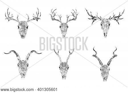 Vector Set Of Silhouettes Skulls Of Horned Animals: Antelope, Deer And Goat On White Background. Gru