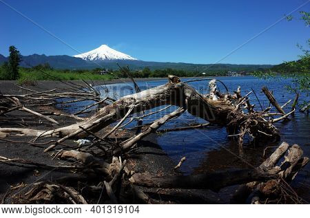Trunks of fallen dead trees in water of lake Villarrica and black volcanic sand with view of Snow capped Villarrica volcano. Nature of Chile. Pucon