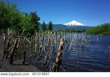 Dead trees logs in water of lake Villarrica and black volcanic sand with view of Snow capped Villarrica volcano. Nature of Chile. Pucon