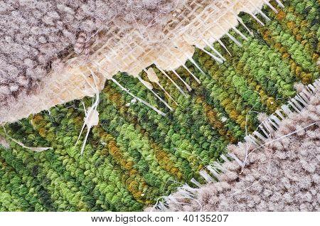 Old Carpet Detail