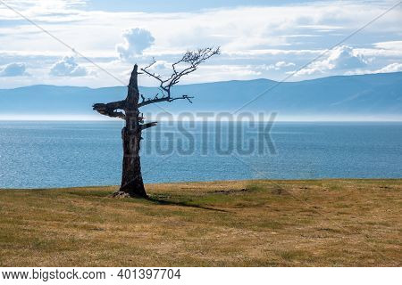 A Lonely Tree Of A Bizarre Shape Against The Background Of The Sky And The Lake. Relict Dry Larch On