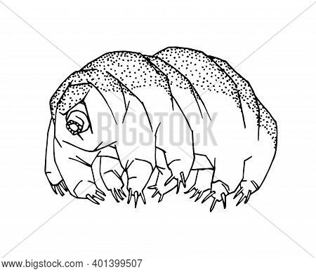 Tardigrade Or Water Bear, A Microscopic Organism That Survives In Outer Space, Vector Illustration W