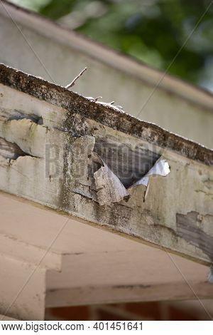 Close Up Of Paint Peeling From A Roof Fascia Board