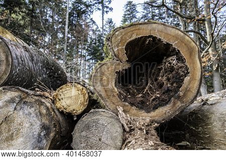 A Cut Down Tree In The Shape Of A Wooden Heart