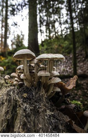 A Bunch Of Mushrooms On An Old Dead Tree Trunk