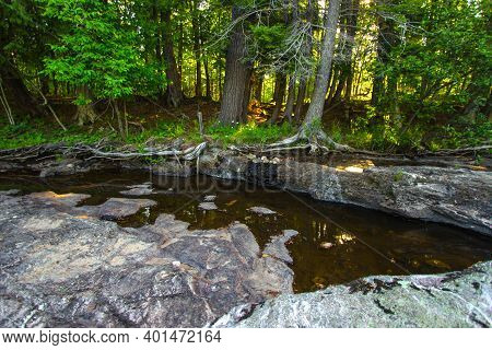 Enchanted Forest Scene. Small Stream Flows Through A Lush Green Forest Landscape With Sunlight Shini