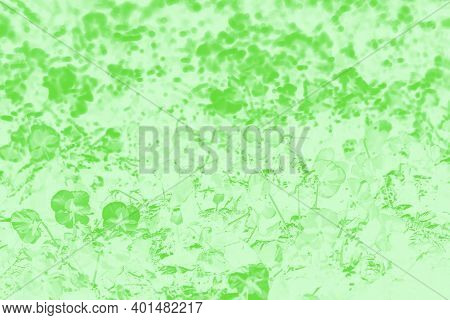 Shades Of Green Color Patchy Background With Pansies Flower Pattern