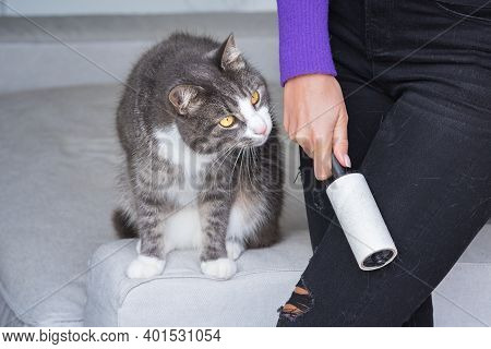 Woman Cleaning Black Jeans With Clothes Roller, Lint Roller Or Hair Removal Roller. Cats Hair On Clo