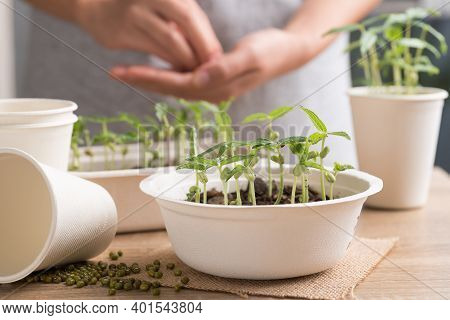 Organic Plant Growing In Recycling Biodegradable Bowl With Woman Hand On Wooden Table, Eco Friendly