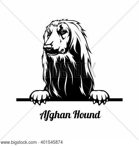 Peeking Dog - Afghan Hound Breed - Head Isolated On White