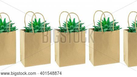 Several Cacti In A Row In A Paper Bag Isolaed On White