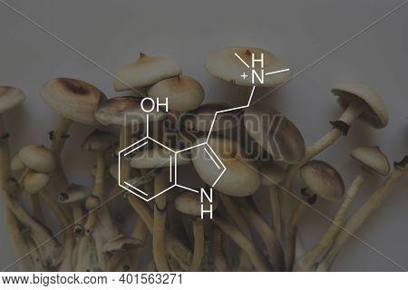 Psilocin Mushrooms Formula. Legalization Medical Psychedelic. Recreational Use Of Psilocybin Mushroo