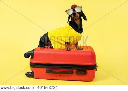 Cute Dachshund Dog In Summer T-shirt, Sunglasses, Hat Gathers Things For Vacation On Trip, Sit On Su