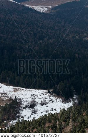 Snow In Mountains And Green Branches And Tops Of Firs And Pines. Vertical Screensaver Of Nature And