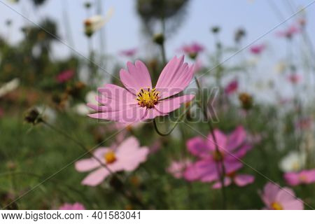 Beautiful Natural Flower Field Agriculture Stock Photo