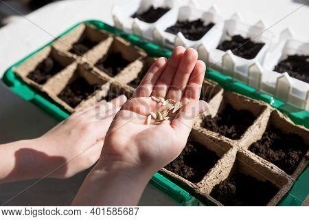 Female Hand Seeding For Planting, Nursery Tray Vegetable Garden.gardening, Planting At Home. Child S