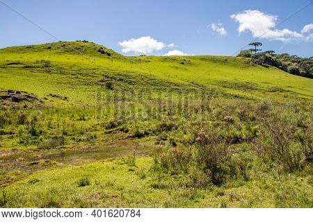 Farm Field With Stream, Flowers, Plants And Araucaria Forest