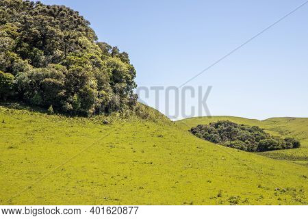 Farm Field With Flowers And Araucaria Forest