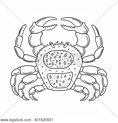 Sketch Of A Crab. Marine Arthropod Animal, Hand-drawn Doodle Design Element. Simple Contour Black An