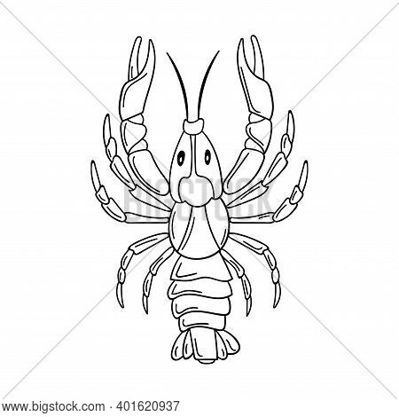 A Whole Raw Live Crayfish With Pincers. Seafood, A Freshwater Arthropod. Contour Sketch Food Illustr