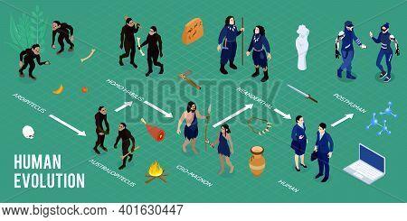 Human Evolution Isometric Infographics Layout With Images Of Homo Habilis Ardipithecus Cro Magnon Au