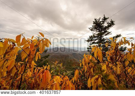 Looking Down On Blue Ridge Mountains Through Yellow Leaves Along The Blue Ridge Parkway
