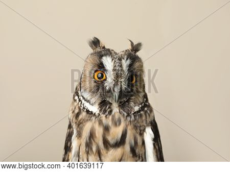 Beautiful Eagle Owl On Beige Background. Predatory Bird