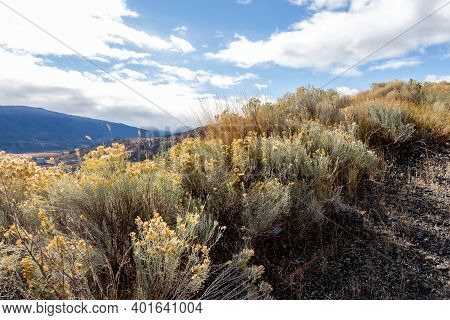 Tumble Weeds And Mountain View In Merritt, British Columbia, Canada On A Sunny Autumn Day