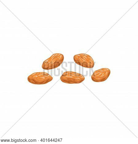 White Raisins Dried Fruits, Dry Food Snacks And Fruit Sweets, Isolated Vector Icon. White Raisins Of