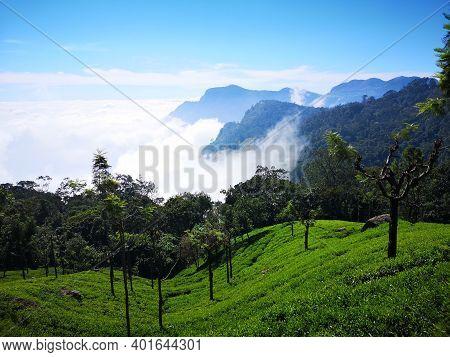 Spectacular View Of Coonoor Mountain Valley And Tea Gardens