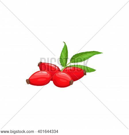 Rose Hip Fruits Or Berries Icon, Food From Farm Garden And Forest, Vector. Rosehip Fruits, Rose Hip