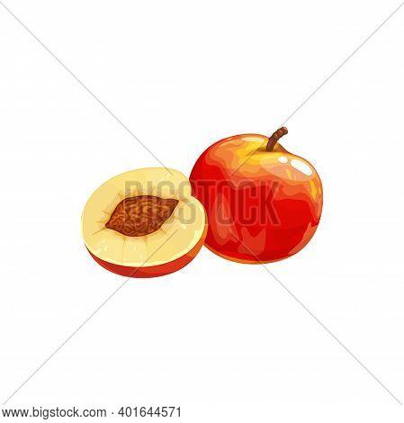 Nectarine Peach Fruit Icon, Tropical Exotic Food, Vector Isolated. Nectarine Peach Fruits Half Cut A
