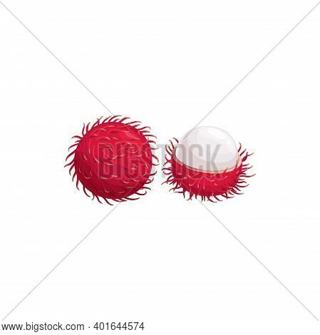 Lychee Fruit, Litchi Or Lichi Tropical Exotic Food, Vector Isolated Icon. Lychee Or Lichee Fruit Cut