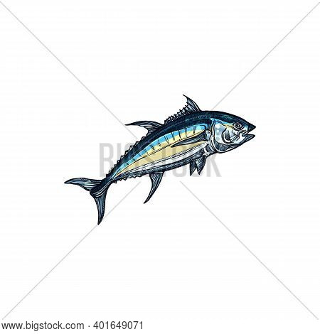 Atlantic Bluefin Tuna Isolated Saltwater Fish Sketch. Vector Saltwater Animal, Atlantic Bluefin Tunn