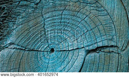 Cracked Bough On An Old Dried Weathered Wooden Board Close Up. Dark Blue-green Toned Background Or W