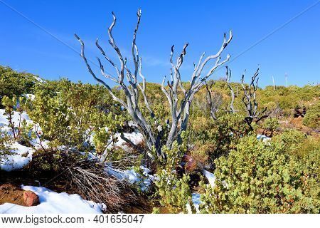 Chaparral Plants Surrounded By Snow On An Arid High Desert Plateau Taken At Windswept Badlands In An