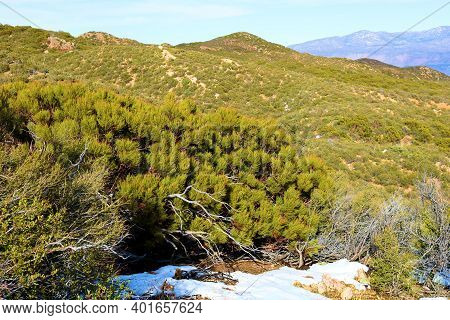 Chaparral Shrubs Besides A Dusting Of Snow On A Windswept Mountain Ridge At The Southern California