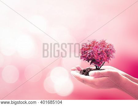 World Kindness Day Concept: Human Hands Holding Red Heart Of Tree Over Blurred Beautiful Pink Nature