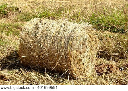Hay Or Straw Roll In The Paddy Field
