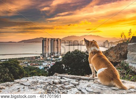 Dog overlooking sunset view of Nha Trang city from the mountain, Vietnam.