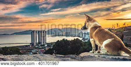 Dog overlooking sunset view of Nha Trang city from the mountain, Vietnam. Panorama