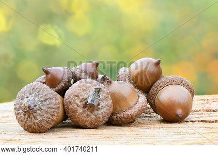 Acorn Of An Oak Tree On Wood Background. High Resolution Photo. Full Depth Of Field.