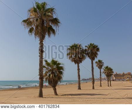 Palm Trees Torre La Mata Beach Spain Costa Blanca