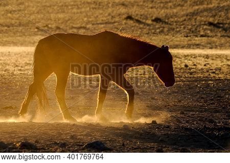 Silhouette Of A Wild Horse Of The Namib Walking. Photo Taken At Garub