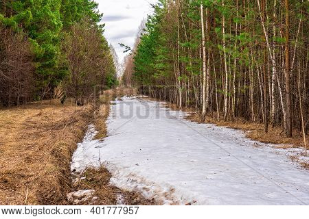 Spring Is Coming. Still Not Melted Snow On Road Along Forest Edge In Spring Forest. Snowdrift On Cou